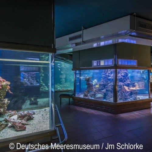 Ausflugstipps für Familien - Deutsches Meeresmuseum Stralsund