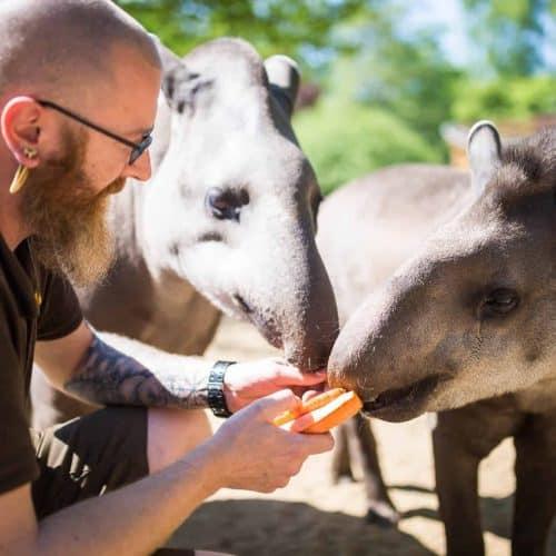 Ausflugstipps für Familien - Zoologischer Garten Schwerin