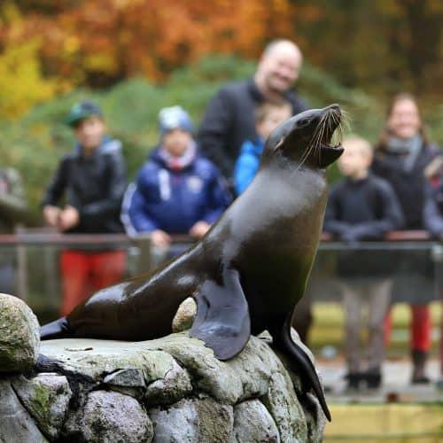 Ausflugstipps für Familien - Zoo Rostock